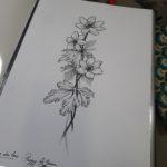 anemone des prés